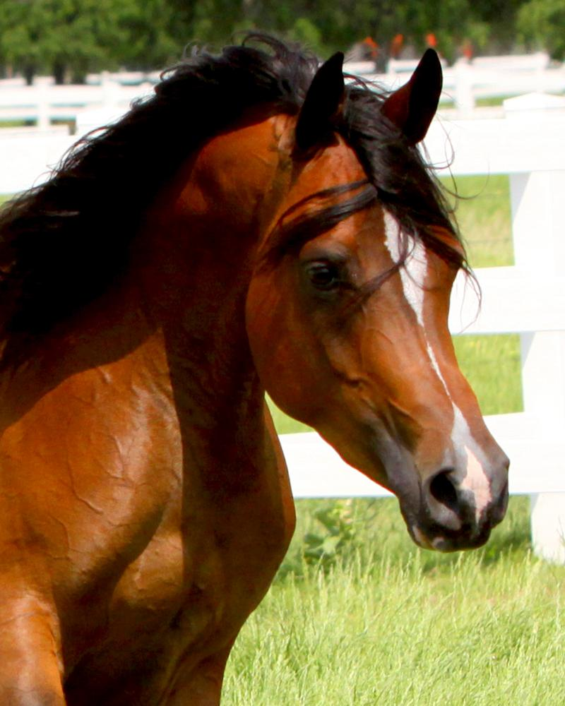 Thee Kajaree, bay mare, sired by The Minstril