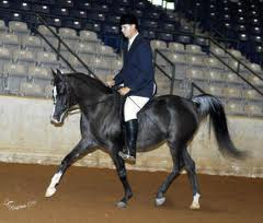 Gameela FA, 2002 black Egyptian mare, by Al Baraki x. Minstrils Bouquet by The Minstril