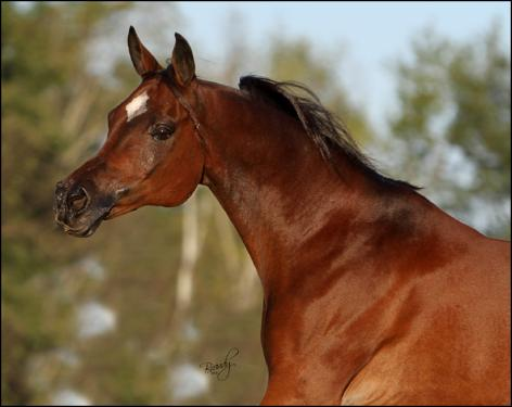 Mystry of the Wind, 1990 bay mare, by Thee Desperado x. Laayla Gamira