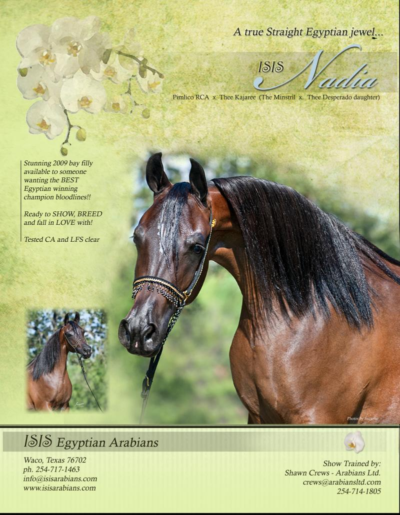 ISIS Nadia, 2009 bay mare, sired by Pimilco RCA x. Thee Kajaree by The Minstril