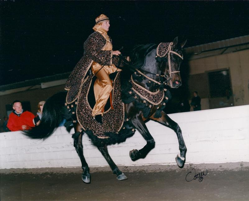 THEE OUTLAW, 1994 bay stallion, by Thee Desperado x. Imasar by SAR Ibn Moniet